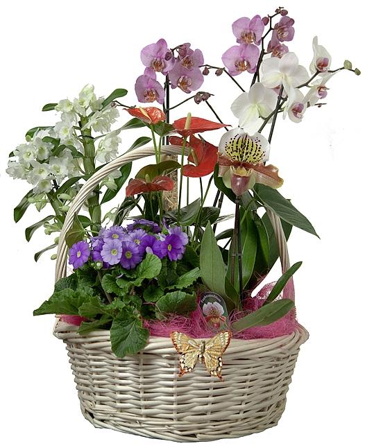 Корзины для орхидей как сделать самому
